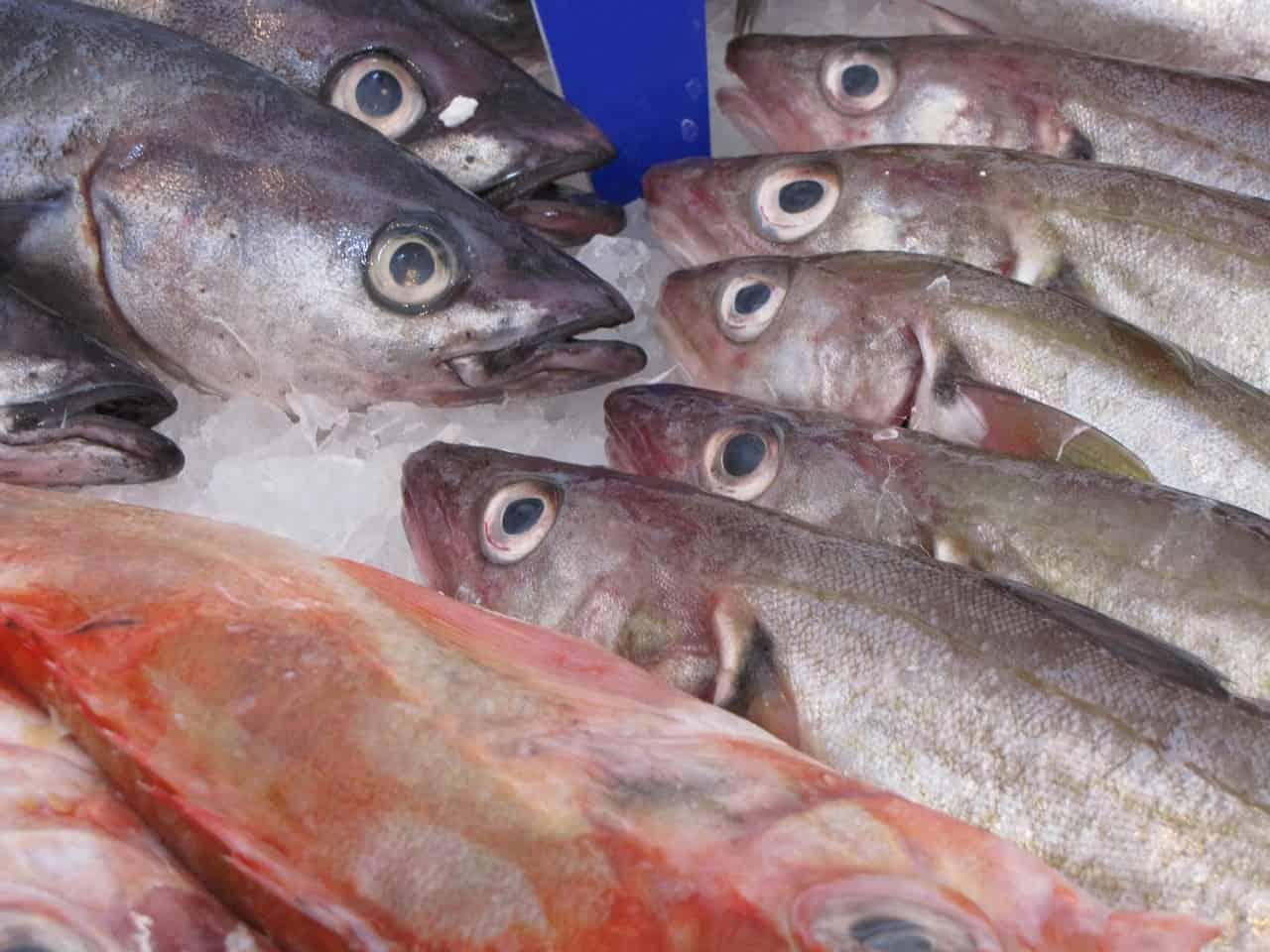 pesce azzurro proprietà
