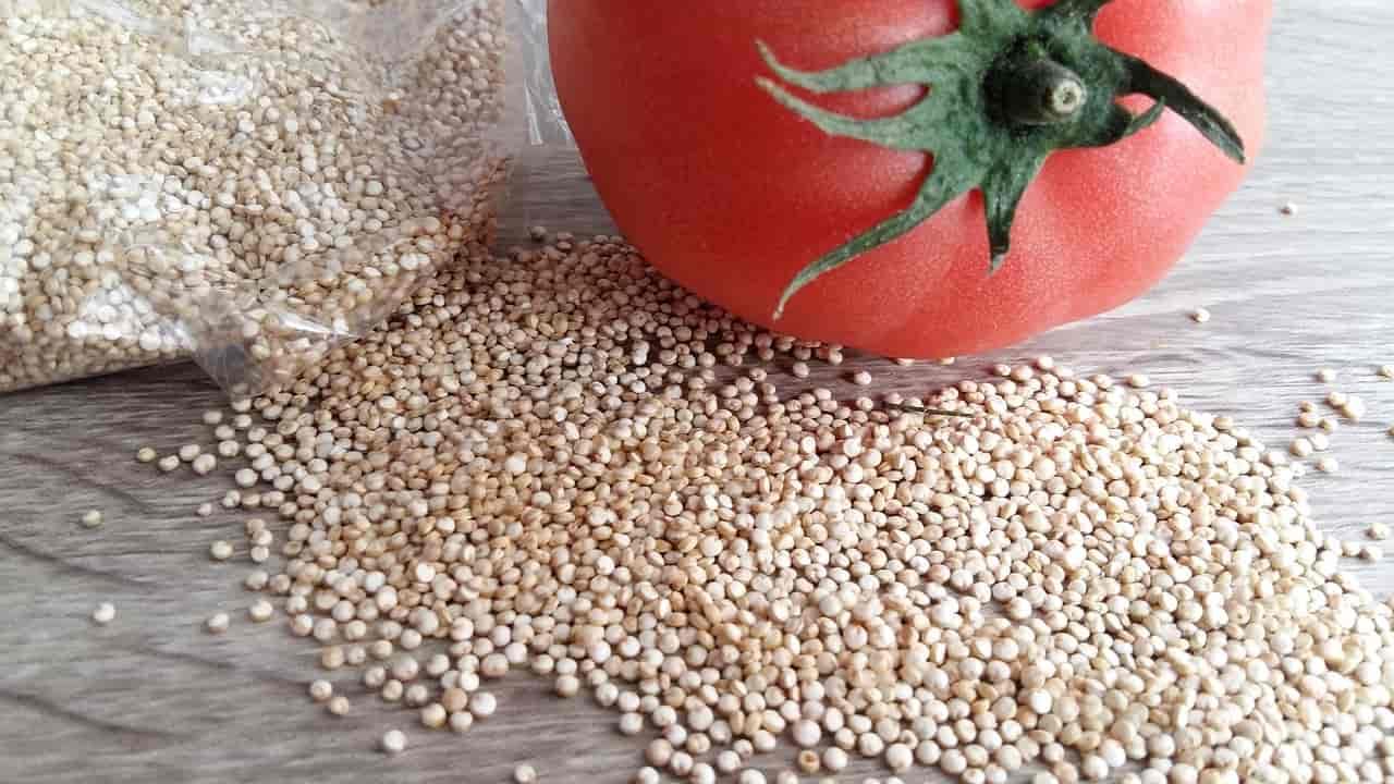 quinoa proprietà e ricette
