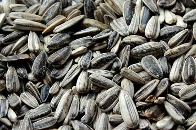 semi oleosi dieta
