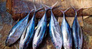 pesce azzurro ricette
