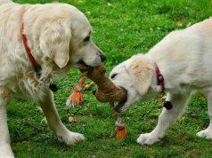 gioco per cani fai da te