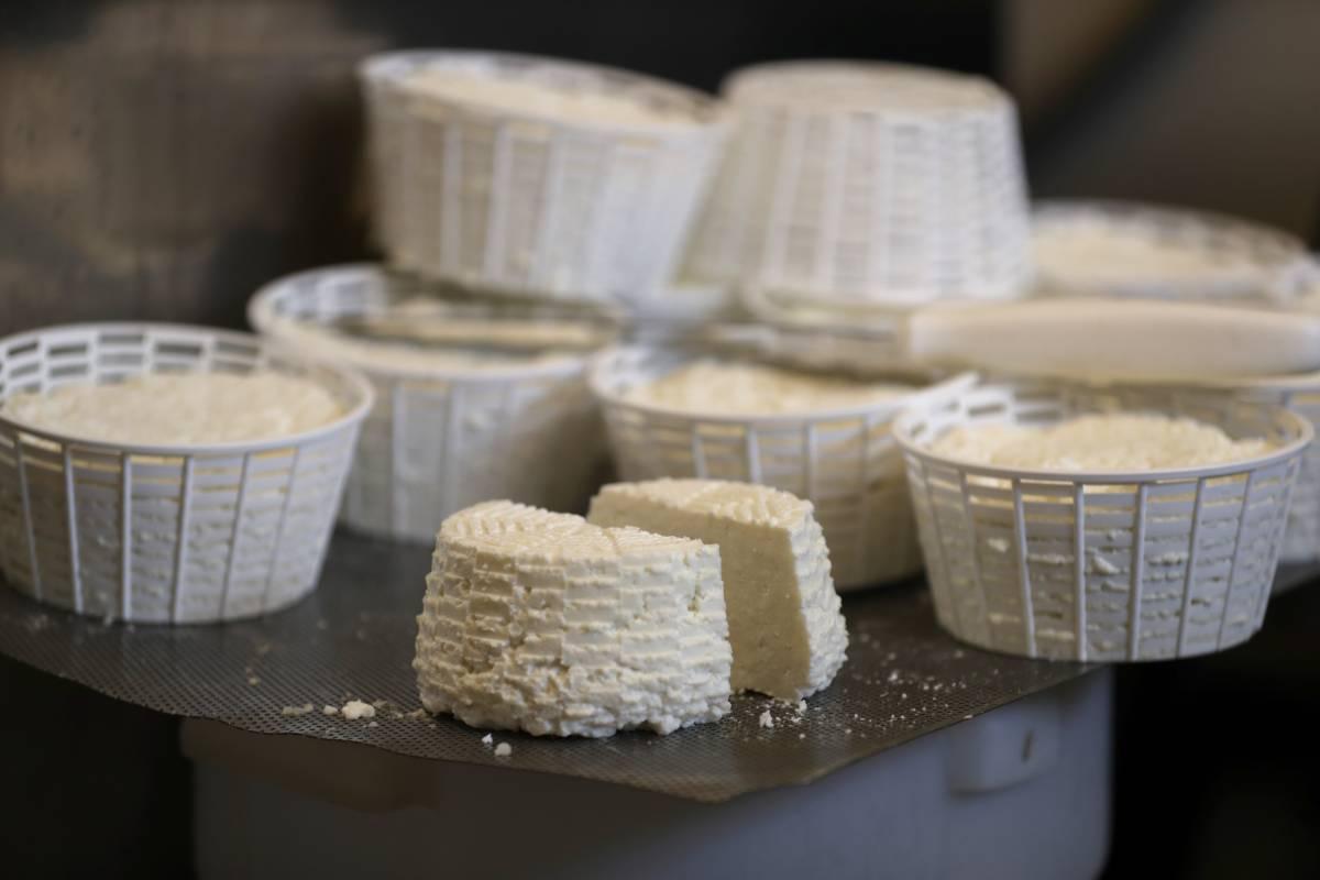 formaggio rischio contaminazione