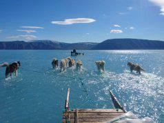 Cani che camminano sull'acqua, risolto mistero ma emerge grave problema