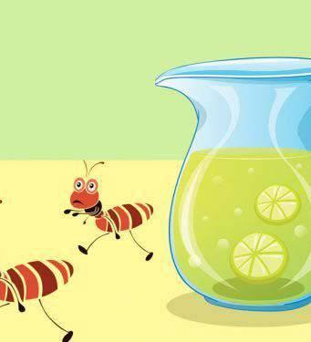 Repellenti naturali per sbarazzarsi delle formiche in modo permanente