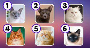 La razza del tuo gatto rivela la tua vera personalità