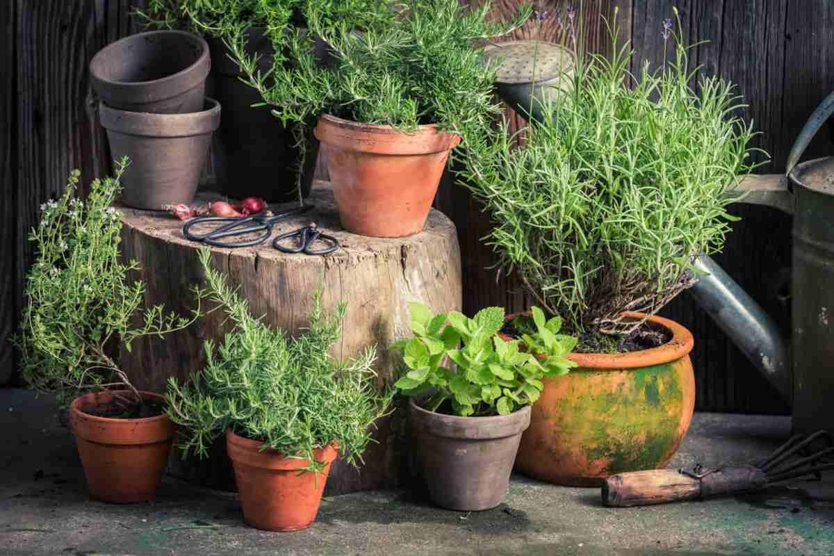 le migliori erbe per perdere peso