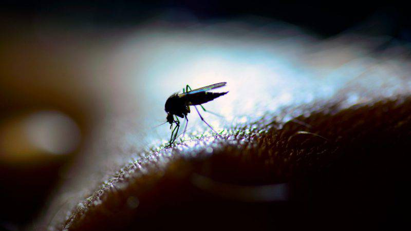 zanzara fare non fare