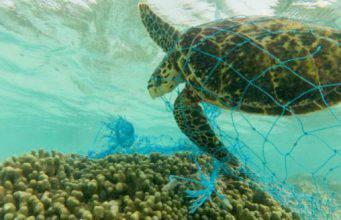 Inquinamento nel mediterraneo: viviamo in un mare di plastica?