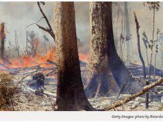 Perché gli incendi boschivi in Amazzonia sono una minaccia per l'umanità?