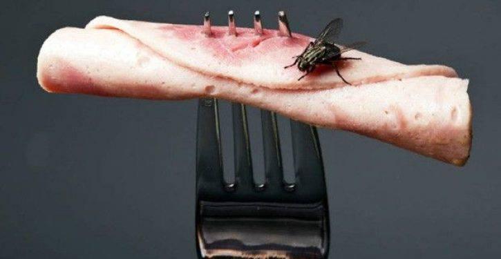 Ecco cosa succede quando una mosca atterra sul tuo cibo