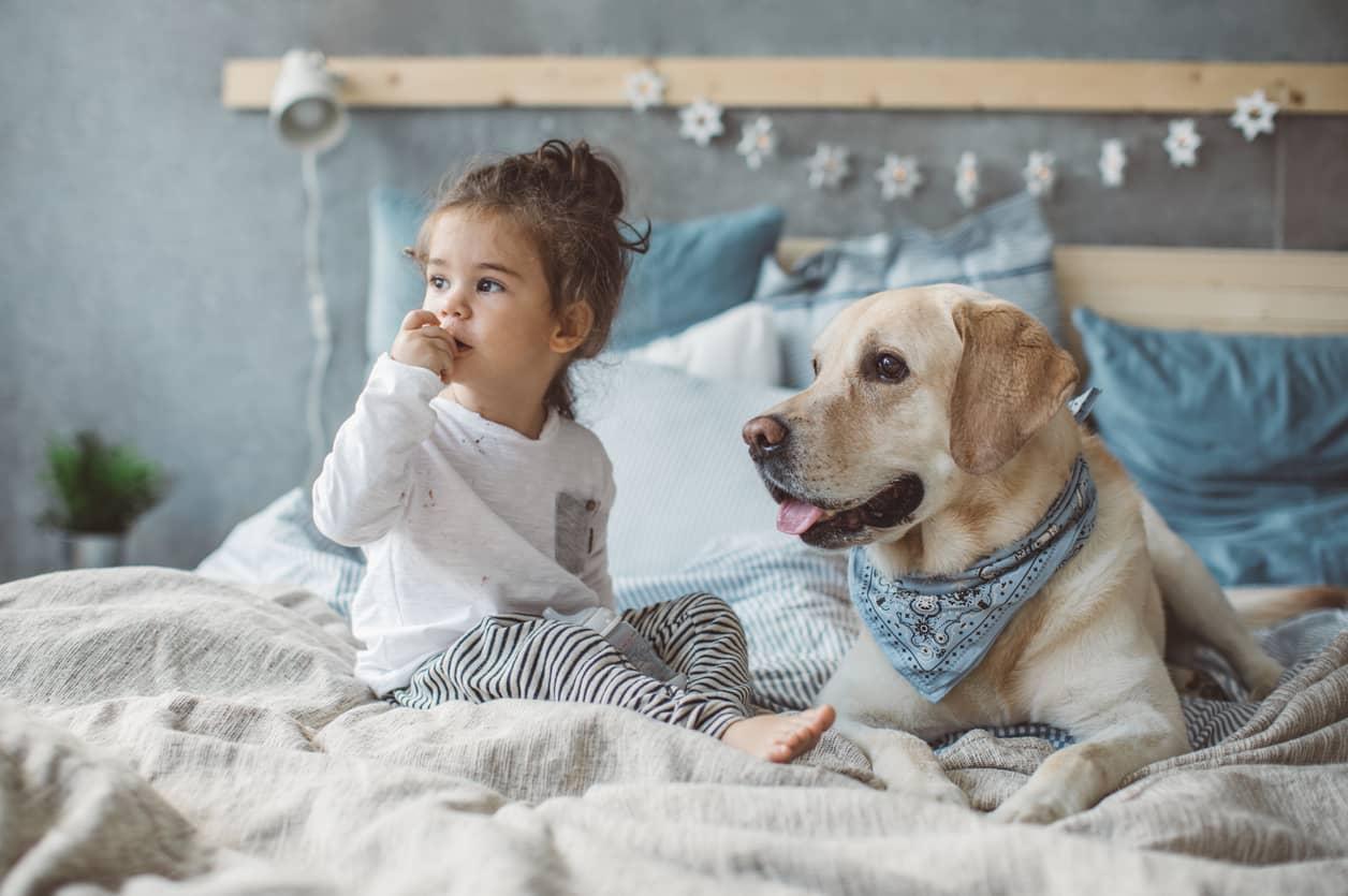 Cani e bambini come farli convivere serenamente