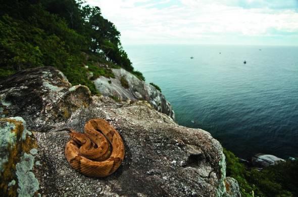 Isola di Queimada Grande, Brasile: i luoghi più pericolosi del mondo