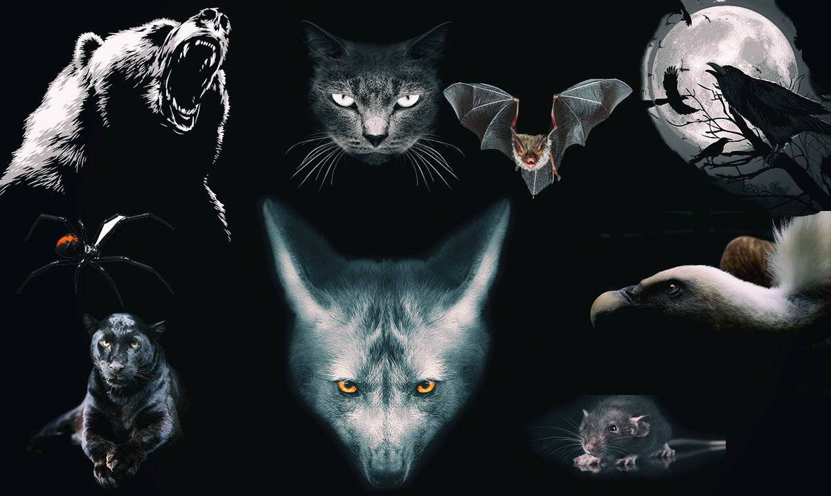 L'animale che scegli rivela il lato più oscuro della tua personalità
