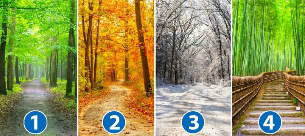 Test psicologico: dimmi in quale stagione preferisci la foresta e ti dirò chi sei