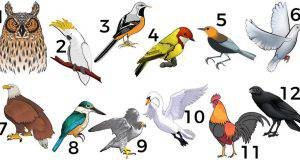 L'uccello del tuo mese di nascita descrive la tua personalità profonda