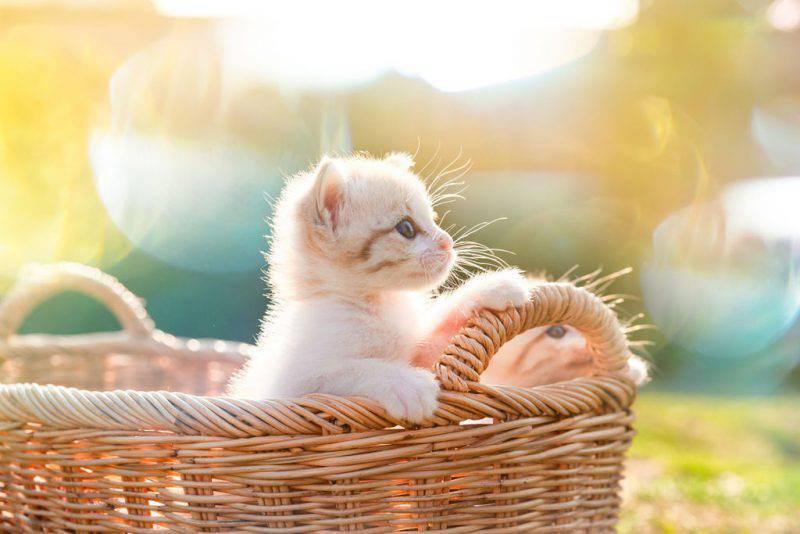 Perchè amiamo così tanto le cose piccole e carine?