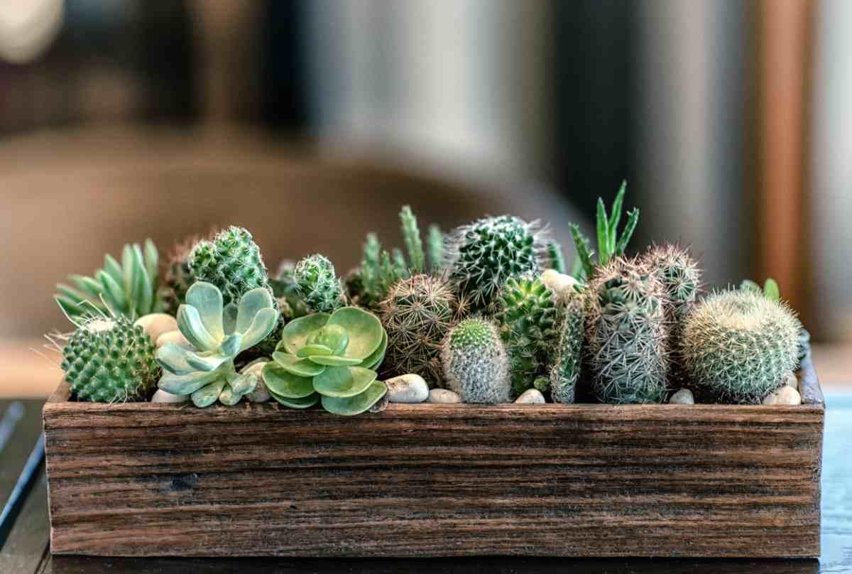 Pianta Da Ufficio Poca Luce piante grasse da avere in casa, scopri i benefici per la salute