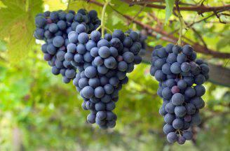 dieta uva per perdere peso