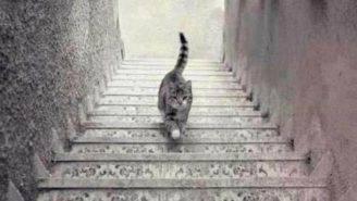 test gatto
