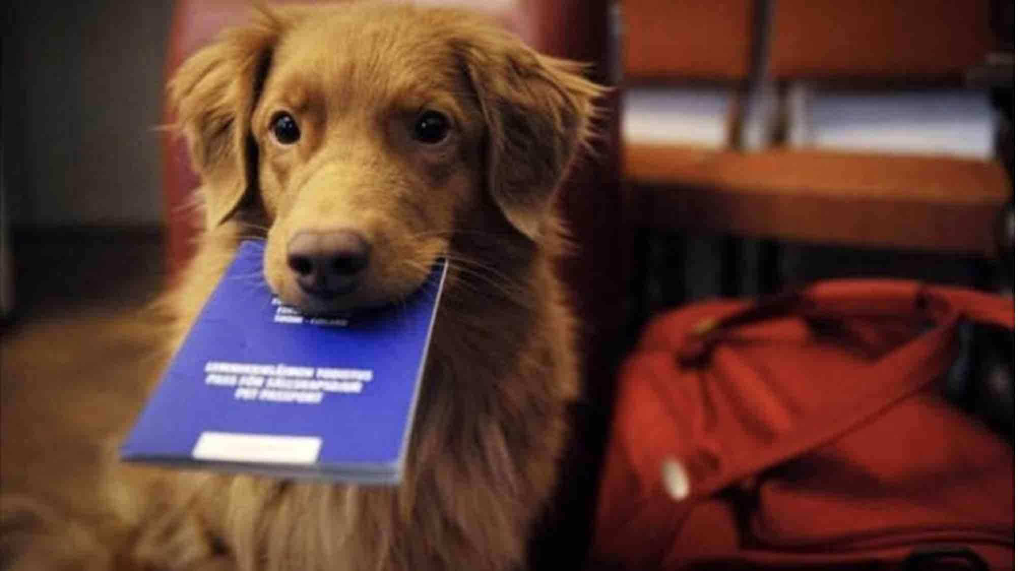 documenti cane
