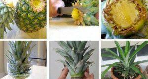 scarti di cucina DIY