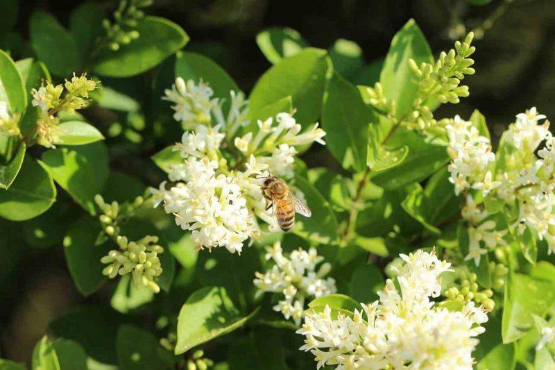 Propoli prodotta dalle api