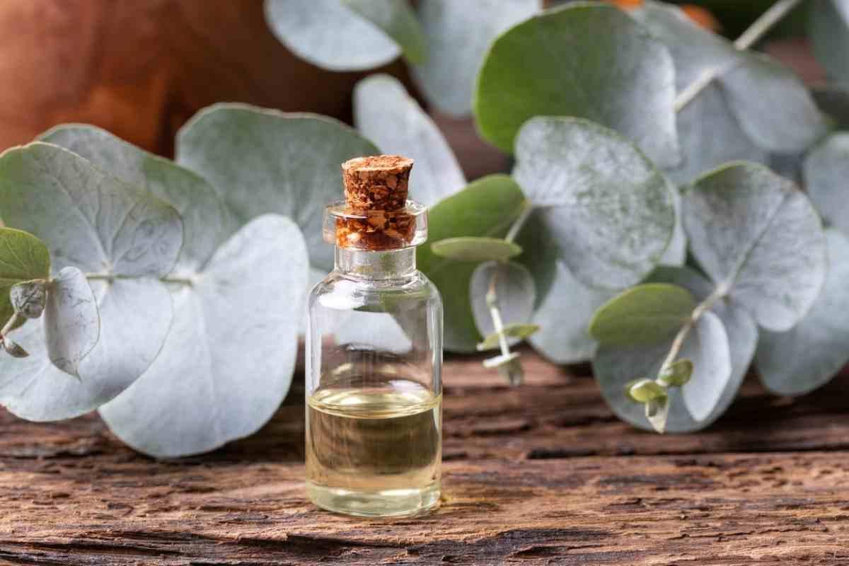Tea tree oil dalle proprietà straordinarie | 10 motivi per usarlo