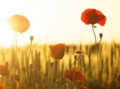 fiori potere segni zodiacali