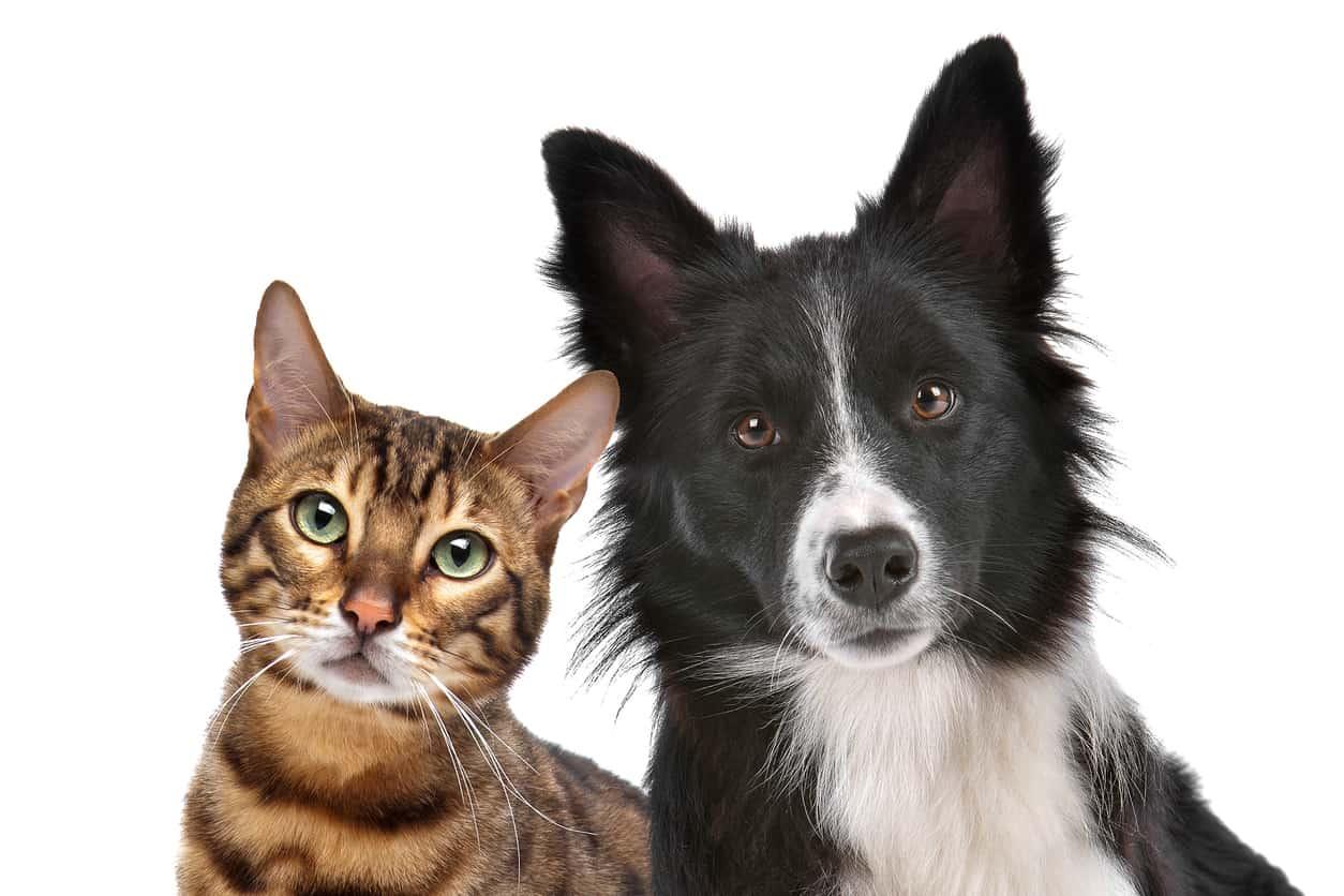 test personalita cane o gatto