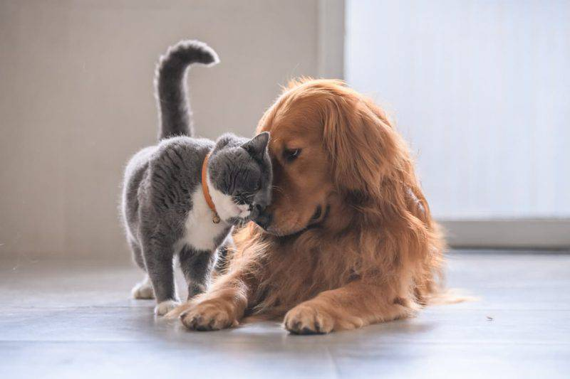 test cane o gatto