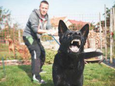 come funziona il patentino per cani pericolosi