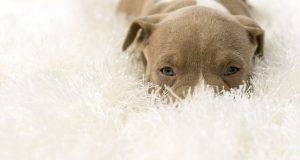 Ecco perché il tuo cane scava