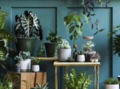 Orto in casa: tutto quello che ti serve per renderlo perfetto e rilassarti
