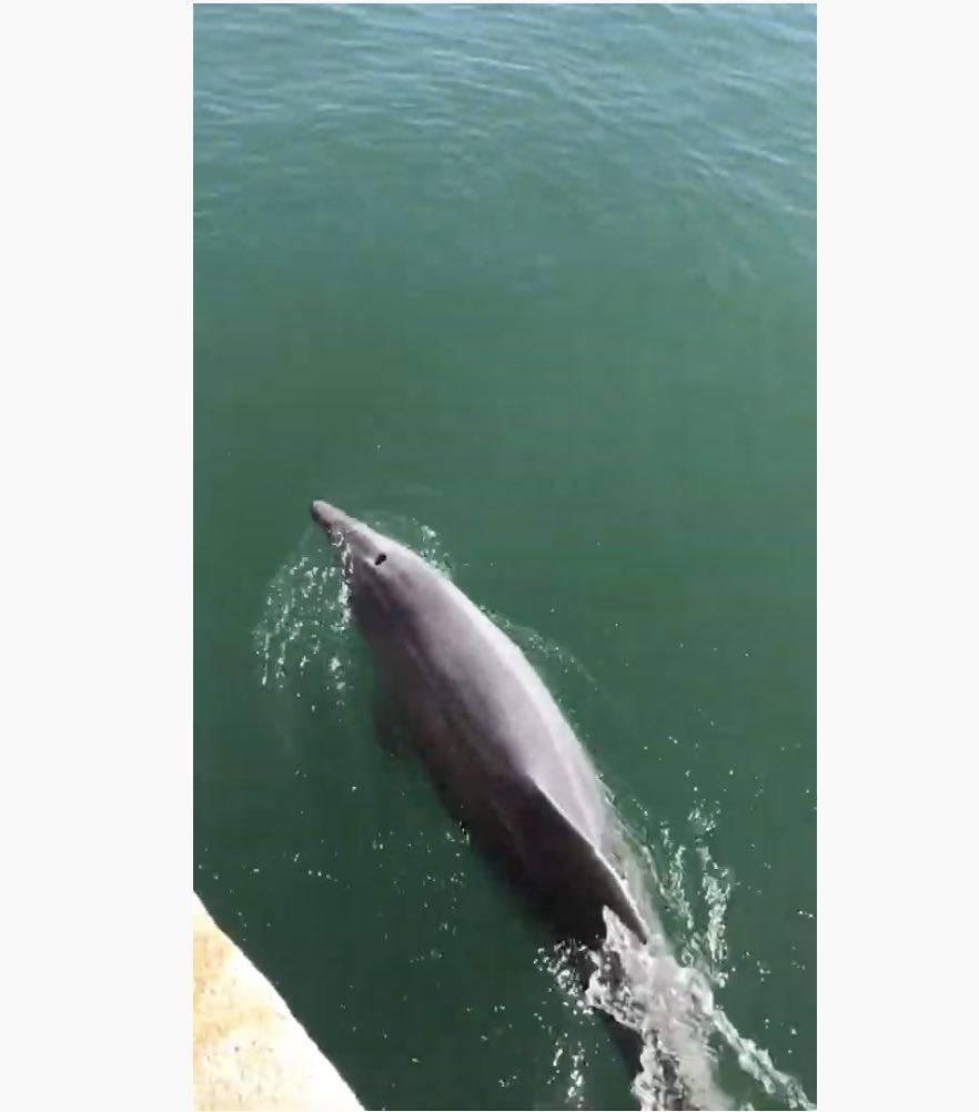 delfino Cagliari