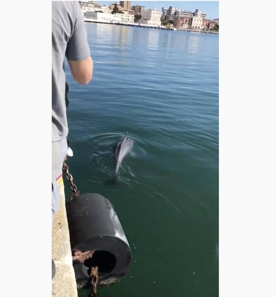 delfini porto Cagliari