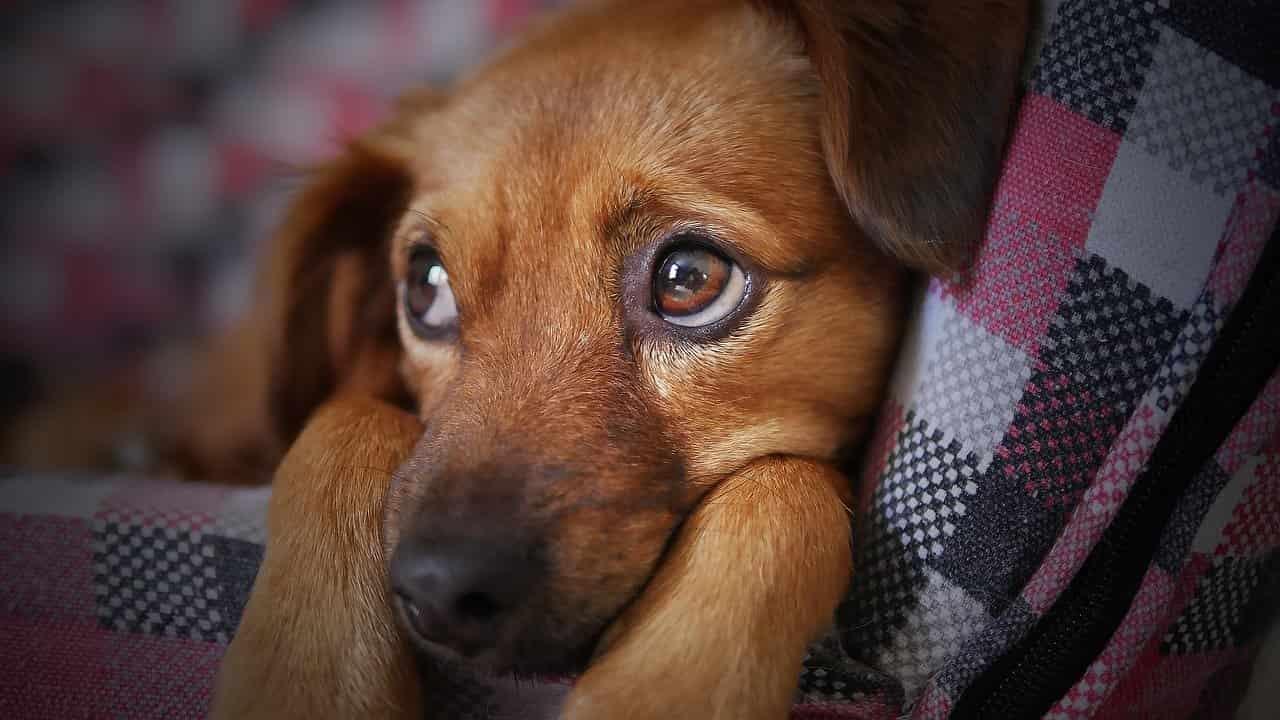 Tre consigli da seguire quando si deve lasciare il cane solo in casa