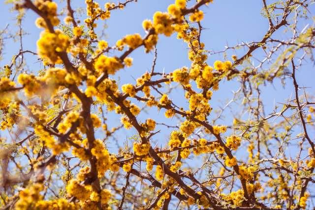Mini tortine mimosa | L'8 Marzo