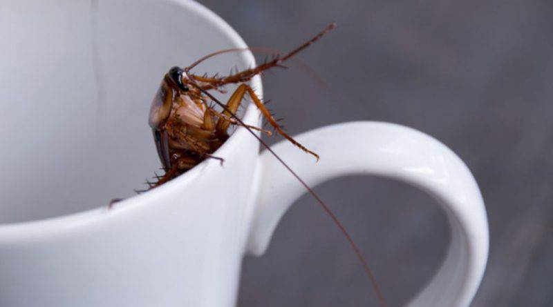 latte di scarafaggio