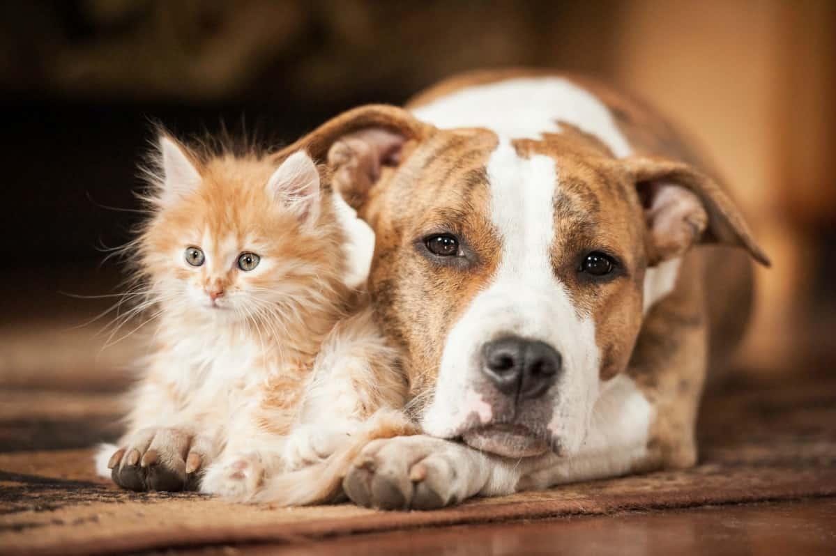Covid-19 cani e gatti trasmettono il virus? La posizione dell'Oms