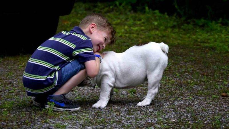 bambini e animali domestici