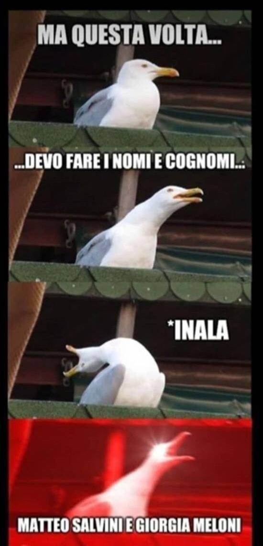 Meme Conte Gabbiano