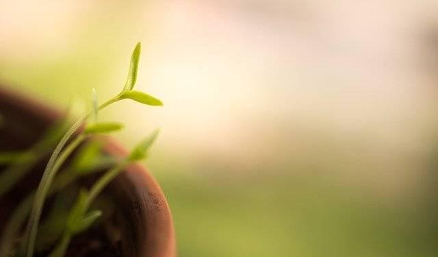 Cavolfiori, porri e germogli | RICETTE, benefici, consigli