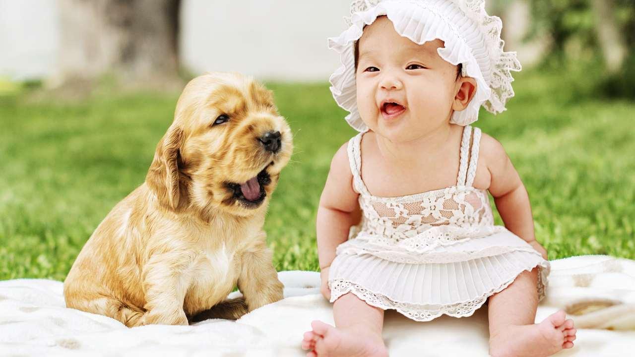 contagio malattie cane bimbo