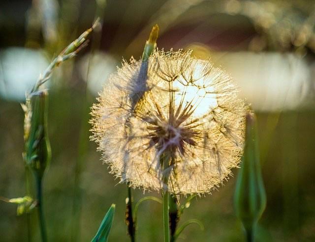 3 RICETTE da non perdere con fiori di zucca, friggitelli e tarassaco