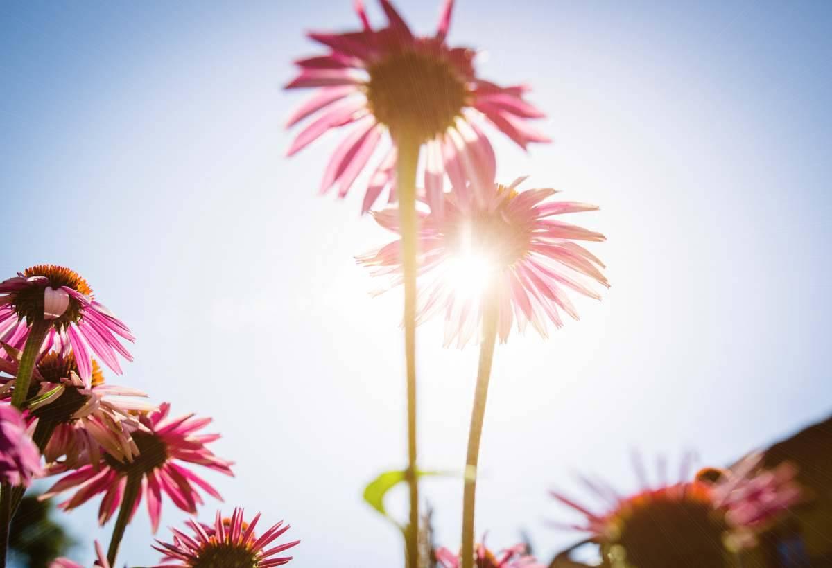 10 piante per rafforzare il sistema immunitario
