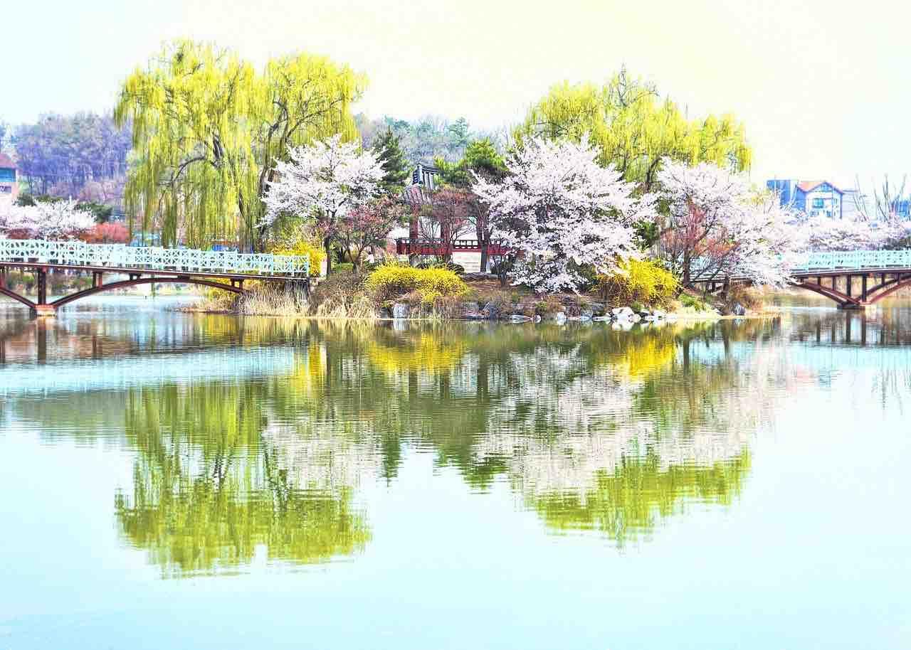 primavera Giappone
