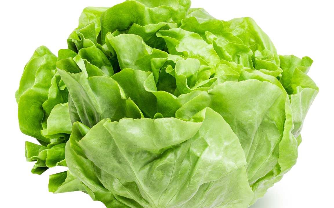 insalata coltivare giardinaggio