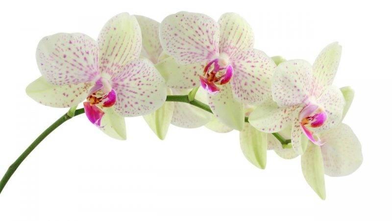 orchidea camera da letto