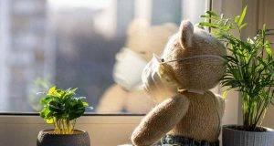 Orso alla finestra