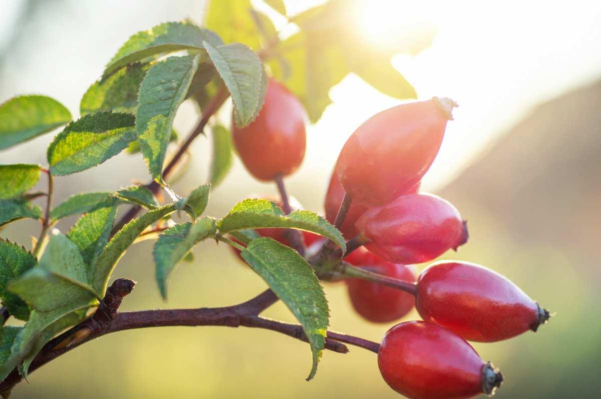 Sistema Immunitario 10 piante che aiutano a rafforzarlo